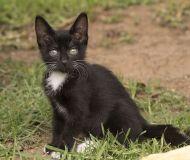 kitten-2850133_640